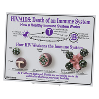 HIV/AIDS: Death of an Immune System Easel Display