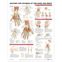 Anatomical Chart- Anatomy and Injuries of the Hand and Wrist