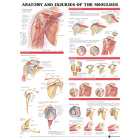 Anatomical Injuries of the Shoulder Chart