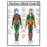 Machine and Muscle Guide - Female