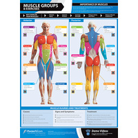 Gym and Fitness Chart - Muscle Groups And Exercises (L)