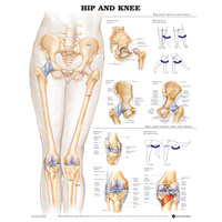 Anatomical Hip and Knee Chart