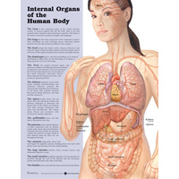Anatomical Chart- Internal Organs of the Human Body