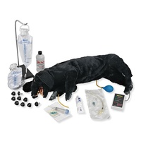 Canine CPR Simulator - Life/Form Advanced Sanitary CPR Dog