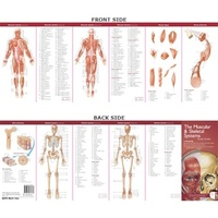 Anatomical Poster Chart- The Muscular & Skeletal Systems Study Guide