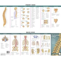 Anatomical Pocket Chart- The Vertebral Column & Spine Disorders Study Guide