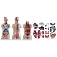 85cm Anatomical Sexless Torso Model along with 20 Parts