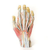 Anatomical Model- Hand Model with high level of granularity