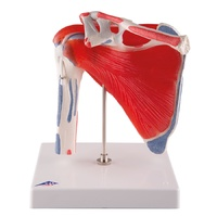 Anatomical Shoulder Joint with Rotator Cuff - 5 part Model