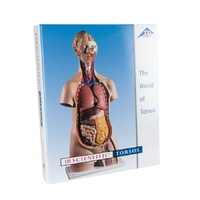 Anatomical Models for 3B Torso Teaching Guide