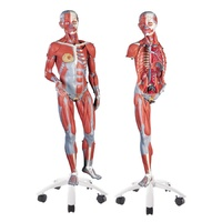 Anatomical Model- 3/4 Life-Size Female Muscle Model on a metal stand without internal organs, 23-part