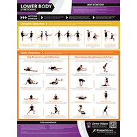 Gym and Fitness Chart - Lower Body - Stretching (L)