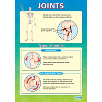 Anatomical Charts for Children- Joints