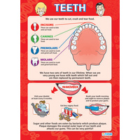 Anatomical Charts for Children- Teeth