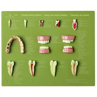 "Case of Teeth ""Keep Your Teeth Healthy"""