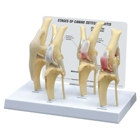 Anatomical Model-Canine 4 Stage Knee