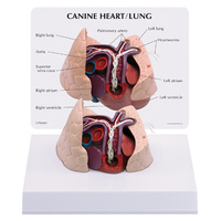 Anatomical Model-Canine Heart and Lung