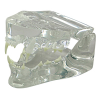 Anatomical Model-Clear Feline Jaw