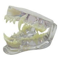 Anatomical Model-Clear Canine Jaw