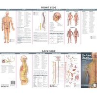 Anatomical Poster Chart- The Spinal Nerves & the Autonomic Nervous System Study Guide
