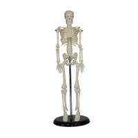 Mini Skeleton Model of 45cm
