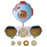 Anatomical Giant Eye Model