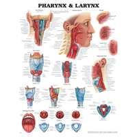 Pharynx and Larynx Charts