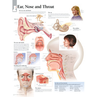 Ear Nose and Throat